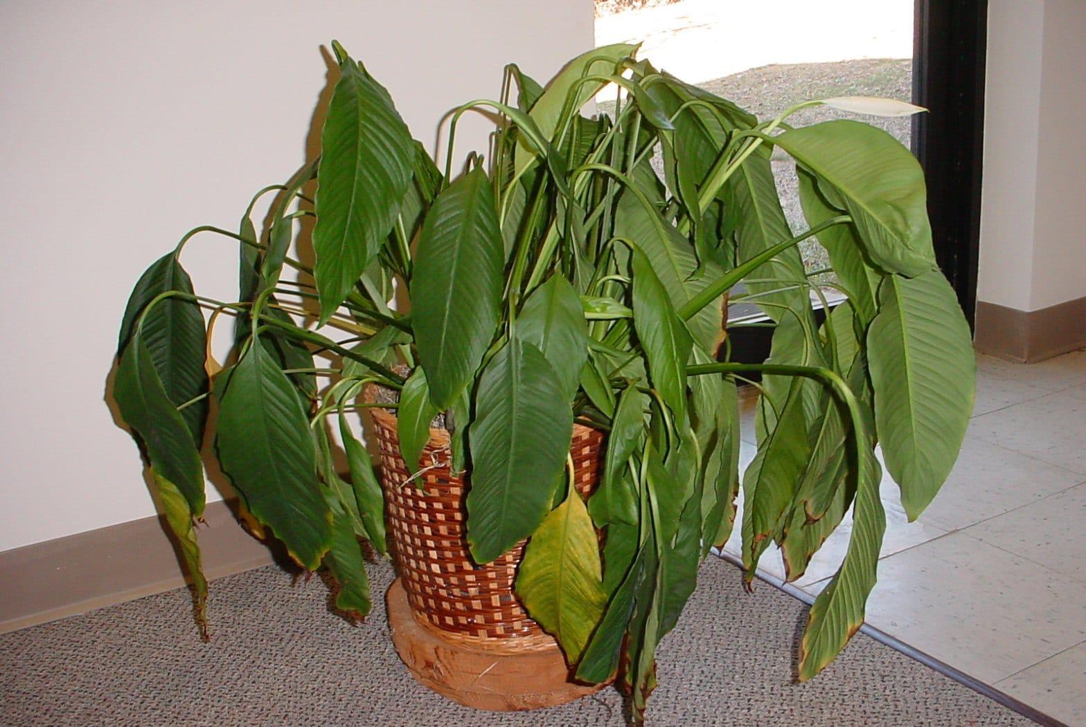 Garden Bush: Horticall Interior Plant Service